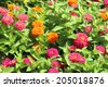 A View Of Flowers - stock photo