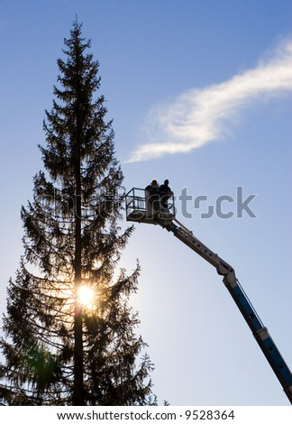 A view of men silhouetted on an extended crane bucket, working on a tall pine tree.