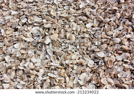 a view of oyster shells / Oyster Shells - stock photo