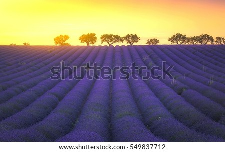 A view of Provence Lavender Fields against a sunset