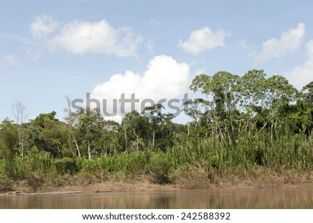 A view of the amazon river in the Tambopa Province on a sunny day. - stock photo