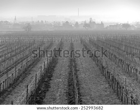 A vineyard in the winter time. In the background you can see Pfaffstaetten, Austria.  - stock photo