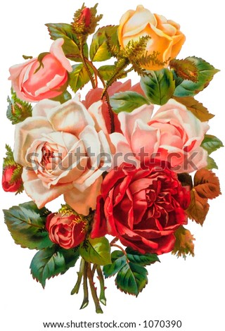 A vintage rose bouquet illustration (circa 1881) - stock photo
