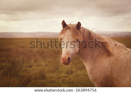 A vintage style retro photograph of a light brown wild horse - stock photo