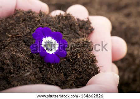 A violet flower beatiful gift - stock photo