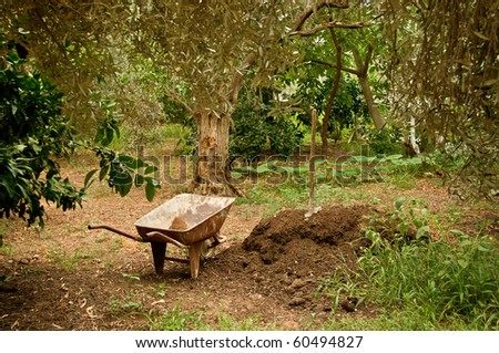 A wagon/wheelbarrow next to manure hill and spade, under olive trees. - stock photo