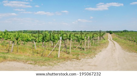 A walk in the vineyard - stock photo