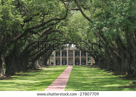 A walking of trees leads to and old plantation - stock photo