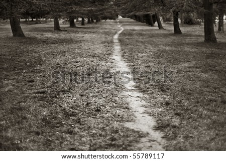 A walking path worn by foot traffic through a grove of Trees