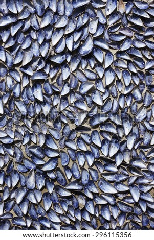 A wall of blue mussels... - stock photo
