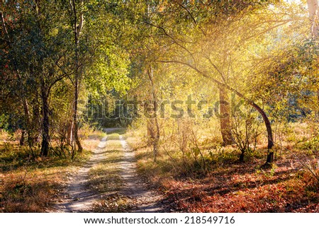A warm sun ray enters in the forest through the tree branches in autumn - stock photo