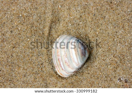 A washed up by the waves seashell lying in the sand