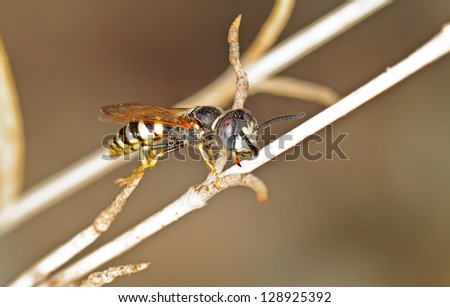 A Wasp in It`s Natural Habitat