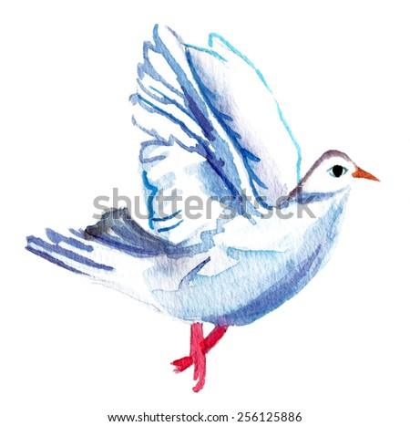 A watercolor pigeon on white background - stock photo