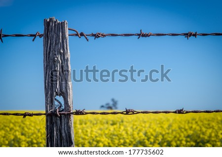 A weathered barbed wire fence surrounds a canola field near Ballarat, Australia.  5 October 2013.
