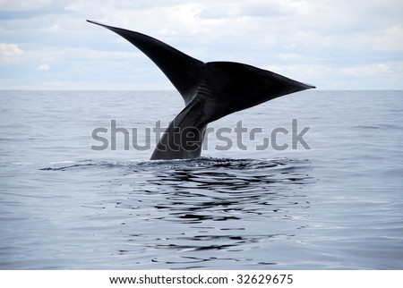 A whale in Peninsula Valdes, Argentina. - stock photo