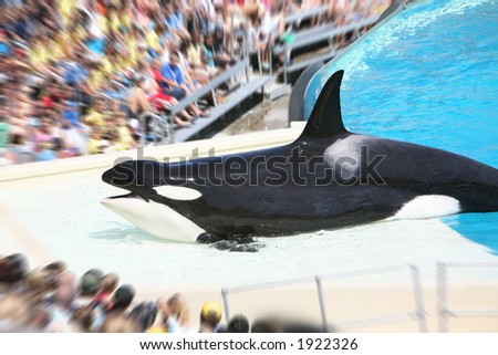 A whale performing for an audience at the zoo - stock photo