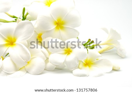 A white and yellow Plumeria flower, isolated on a white background - stock photo