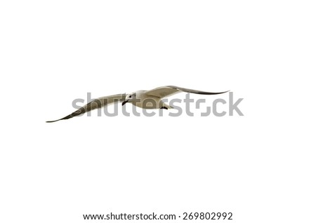 A white bird is flying against a white background - stock photo