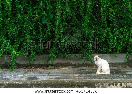 A White cat staring  curiously with green ivy in the background - stock photo