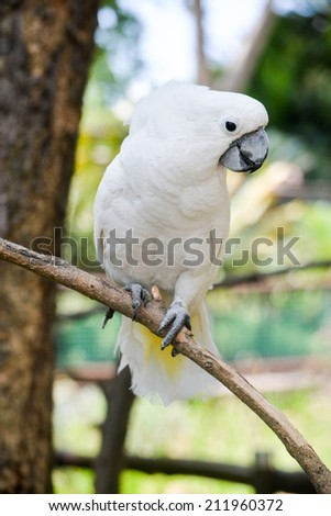A white cockatoo bird in a tree - stock photo