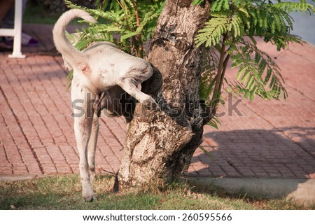 A white dog pee on the tree - stock photo