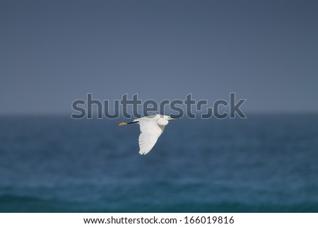 A White Egret Flying over Blue Sea - stock photo