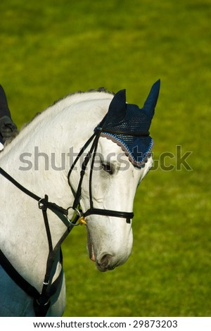 A WHITE horse eating grass in a meadow, its head down. - stock photo