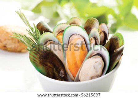 A white plate of New Zealand mussels with a white background - stock photo