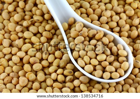 A white spoon of dried Soya Beans, also called Soybean seeds. They can be replacement for animal protein for vegetarians.  - stock photo