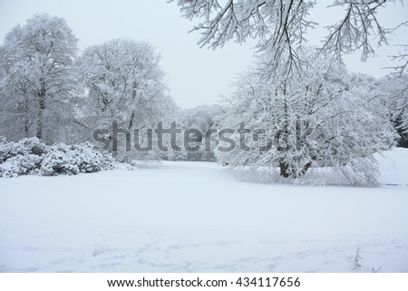 A white winter forest with frosted trees  - stock photo