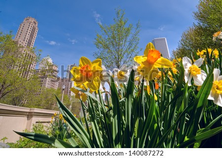 A wide angle view of Michigan Avenue, Chicago, framed by vibrant spring bulbsi.  Hyperfocal distance used to achieve front to back sharpness. - stock photo