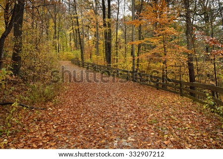 A wide trail cuts through a colorful autumn forest in a state park.