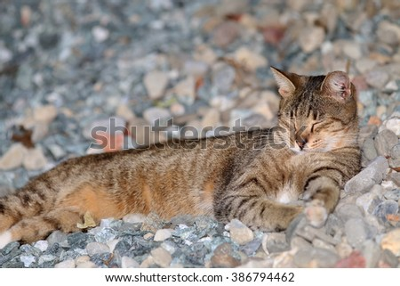 A Wild Feral Cat Sleeping Outside on a Pile of Rocks with a Leaf Stuck to its Belly - stock photo