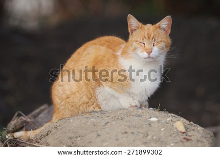 A Wild Feral Cat Sleeping Outside While Enjoying the Warm Sun - stock photo