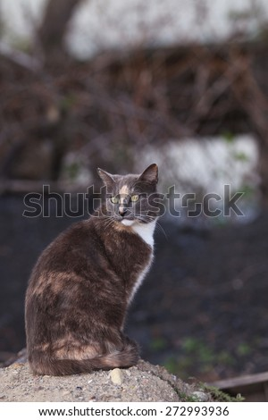A Wild Feral Cat Standing in the Dirt Surveying the Land - stock photo