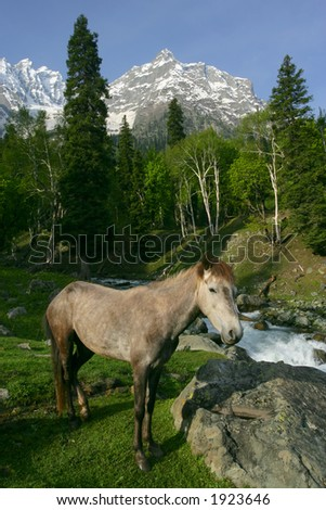 A wild horse near a forest and mountains in Kashmir, India. - stock photo