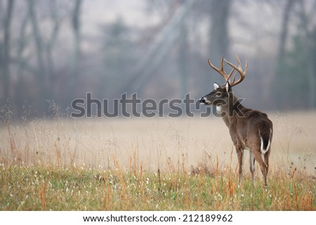 A wild white-tailed deer standing in a meadow. - stock photo