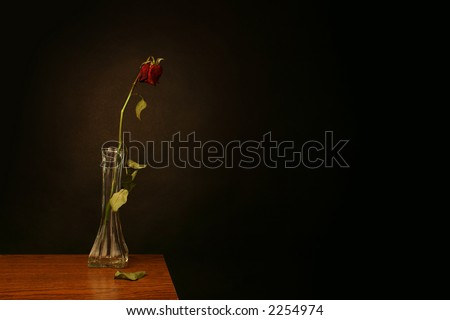 A wilting rose signifies lost love, divorce, or a bad relationship - stock photo