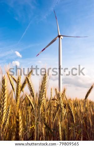 a wind turbine in the grain-field in front of blue sky - stock photo