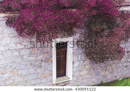 A window in an ancient dwelling stone wall and overhanging tree with red flowers - stock photo
