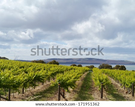 A wine vineyard on Kangaroo island in Australia - stock photo