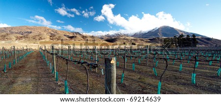 A winery and bare vines at a Central Otago winery on New Zealand's South Island. This area is reknowned for it's splendid Pinot Noir varieties - stock photo