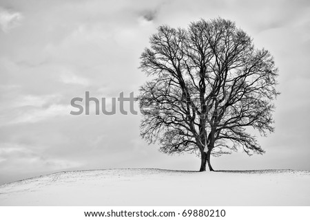 A winter scenery with a tree in Bavaria Germany