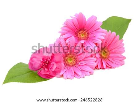 A wishing gerber flowers - stock photo