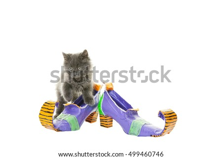 A witch's curled and weathered shoes and her fluffy charcoal gray cat.  Shot on white background.