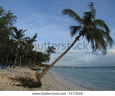 A woman resting on a palm tree by the beach.