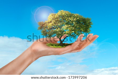 a woman's hand holding a 3d tree on sky background - stock photo