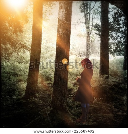 A woman standing in a group of tall trees with sun shining through them. - stock photo