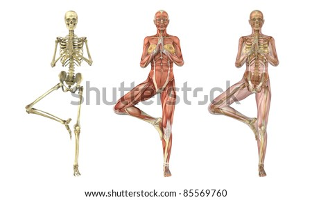 A woman stands in a yoga tree pose, anatomical overlays -  these images will line up perfectly,  and can be used to study anatomy - 3D render. - stock photo